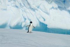 Adelie-Pinguin auf Eisberg Stockbilder