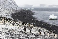 Adelie-Pinguin-Kolonie auf einer Steigung und einem Strand Lizenzfreies Stockfoto