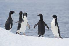 Adelie-Pinguin springen Lizenzfreie Stockfotografie
