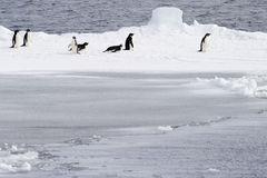 Adelie-Pinguine Stockfoto