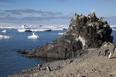 Adelie-Pinguine auf dem Strand mit Tierkreis im Hintergrund Lizenzfreies Stockfoto