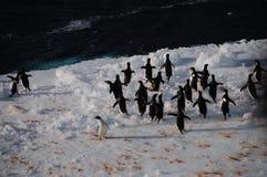 Adelie-Pinguine auf einem Eisregal im Weddell-Meer Stockfotos