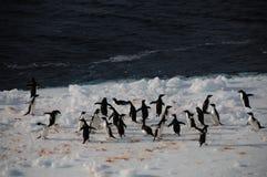 Adelie-Pinguine auf einem Eisregal im Weddell-Meer Lizenzfreies Stockfoto