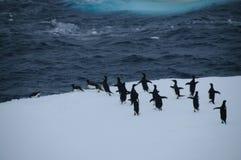 Adelie-Pinguine auf einem Eisregal im Weddell-Meer Lizenzfreies Stockbild