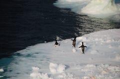Adelie-Pinguine auf einem Eisregal im Weddell-Meer Lizenzfreie Stockfotografie