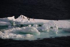 Adelie-Pinguine auf einem Eisregal im Weddell-Meer Stockfotografie