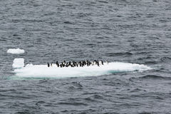 Adelie-Pinguine auf Eis legen beiseite Lizenzfreies Stockbild