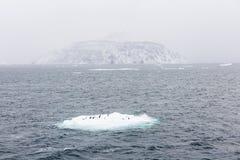 Adelie-Pinguine auf Eis legen und eine Insel beiseite Stockfoto