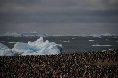 Adelie-Pinguine auf Paulet-Insel Lizenzfreie Stockbilder
