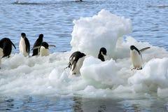 Adelie-Pinguine auf Treibeis Lizenzfreie Stockfotografie