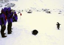Adelie-Pinguine, die für Touristen aufwerfen Stockbild