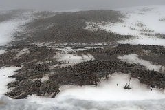 Adelie-Pinguinkrähenkolonie, Gourdin-Insel, antarktischer Ton, Anarctica Lizenzfreie Stockfotografie