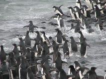 Adelie pingwiny skacze w wodzie Obrazy Royalty Free