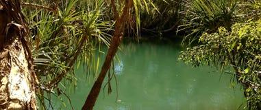 Adell的树丛水坑 库存照片