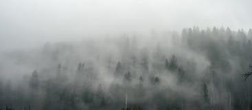 Adembenemend panorama van pijnboomhout in mist stock afbeelding