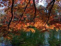 Adembenemende Esdoornbladeren De herfst royalty-vrije stock fotografie