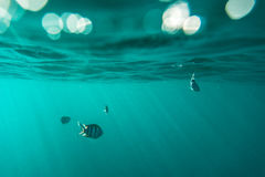 Adembenemende onderwatermening Royalty-vrije Stock Fotografie