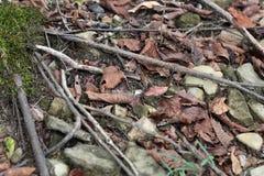 Adena Stone Projectile Point As encontró en Forest Floor imagen de archivo libre de regalías