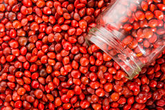 Adenanthera pavonina. Red sandalwood seeds or Adenanthera pavonina L. in glass. / Used as beads and in percussion instruments Royalty Free Stock Photo