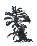 Adenium, árbol, dibujo del marcador Foto de archivo libre de regalías
