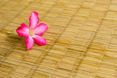 Adenium flowers on a wicker colors. Stock Photo