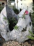 Adenium-obesum oder Wüstenrose-oder Impala-Lilien- oder Spott-Azaleenanlage Stockbild