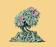 Adenium rose of the desert. Drawing of blooming bonsai adenium. Illustration of a beautiful plant.Rose flowers on a green bush Stock Images