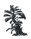 Adenium, tree, marker drawing . Tree, bonsai,black and white Royalty Free Stock Photo