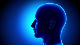 Adenoids - Ear. Human Anatomy - nose