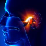Adenoids - ucho ilustracja wektor