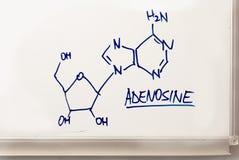 Adenosina Fotos de archivo libres de regalías