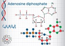 Adenosine diphosphate ADP molecule , is an important organic c Stock Images