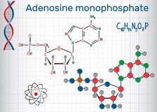 Adenosine monophosphate AMP molecule, it is an ester of phosph Royalty Free Stock Images