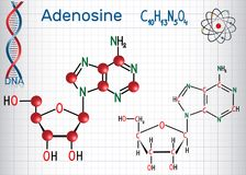 Adenosine - purine nucleoside molecule, is important part of ATP. ADP, cAMP , RNA, DNA. Sheet of paper in a cage. Structural chemical formula and molecule Stock Photos