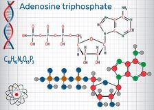 Adenosine triphosphate ATP molecule , is intracellular energy Royalty Free Stock Image