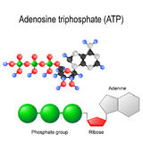 Adenosine triphosphate ATP structural formula Royalty Free Stock Image