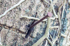 Aderência na árvore Não prejudique o conceito da natureza Fotografia de Stock
