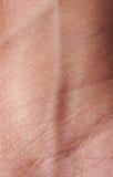 Ader auf menschlicher Haut Lizenzfreies Stockbild