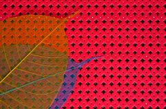 Ader bodhi verlässt auf rotem Kreismusterhintergrund Stockfotografie