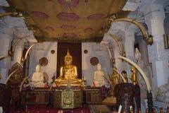 Ader Buddha Stockbild