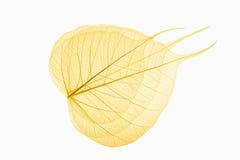 Ader mit drei bodhi Blättern Lizenzfreie Stockbilder