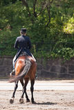 Adestramento equestre Fotos de Stock Royalty Free