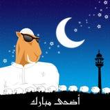 Adha Eid Royalty Free Stock Image