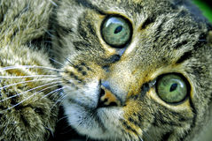 Adiós gatito Foto de archivo