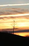 Adiós pájaros Imagen de archivo