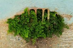 Adiantum capillus-veneris, die auf dem Boden wachsen Lizenzfreie Stockfotos