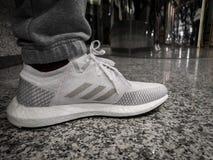 ADIDAS ÖKAR ULTRA, vita och gråa skor på en svart keramisk jordning royaltyfria foton
