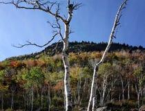 Adirondack-Berge Lizenzfreie Stockbilder