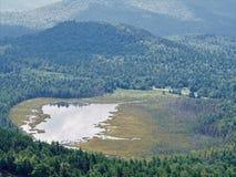 Adirondack bog Royalty Free Stock Photo