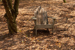 Adirondack chair in forest shade Royalty Free Stock Photography